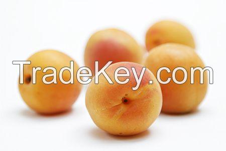 Strawberry, Sour Cherry, Cherry, Raspberry, Blackberry, Fig, Chestnuts, Apricot