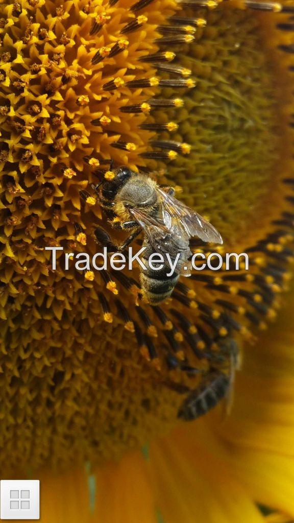 Homogenized honey