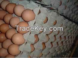 Fresh Chicken Table Eggs and Hatching Eggs