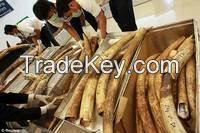 Elephant Ivory Avalable in Large Stock