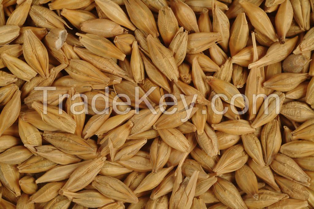 Barley (Russia Origin)