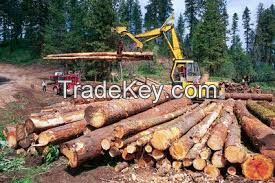 Best Quality Timber Logs and Lumbers