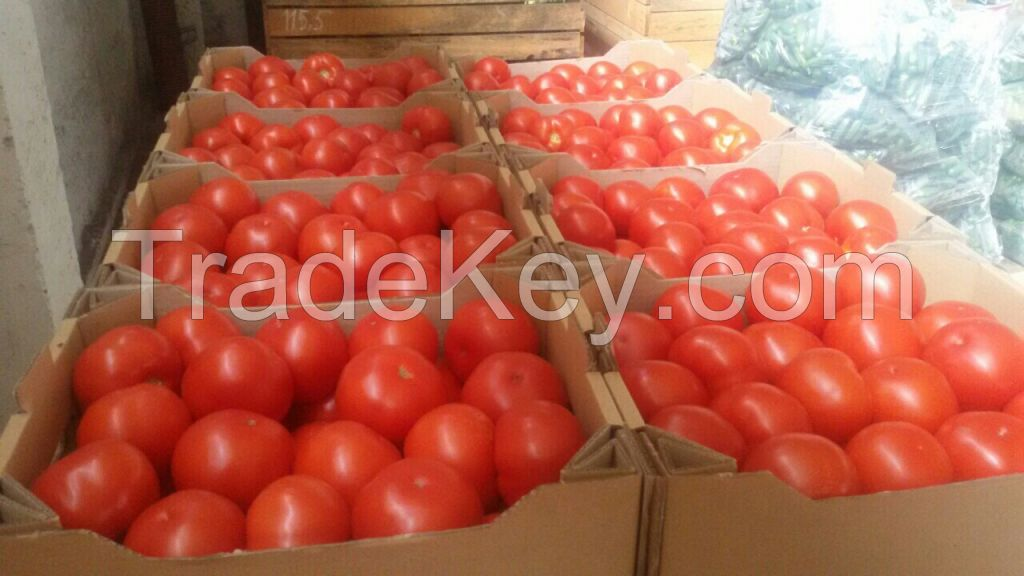 Tomatoes red round