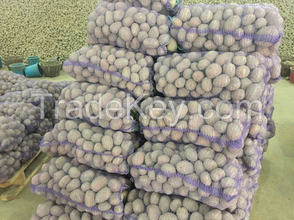 Quality Potatoes By Wholesale - For Export