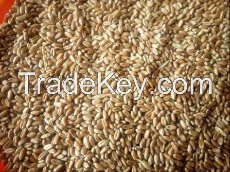 Wheat, 3 Grade