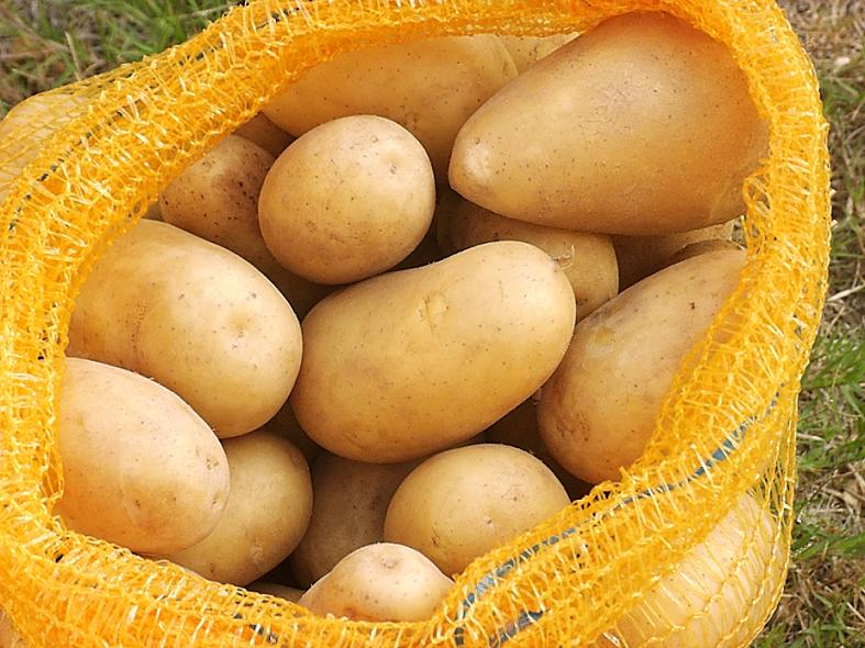 potato, citrus, carrot, leeks, tomato,cauliflower, cabbage,
