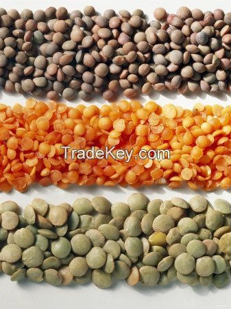 Quality Kidney beans, Mung beans, Soybeans, Lentils, Chickpeas and Other Beans Products For Sale