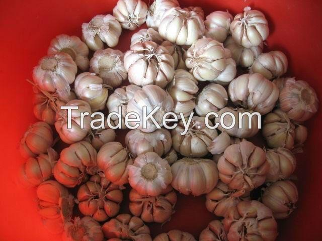 Garlic   A Grade Garlic