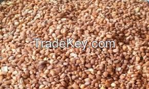 Honey Beans | ORGANIC BEANS