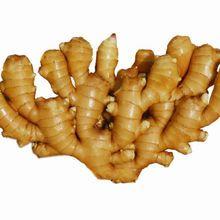 New fresh ginger/ dry ginger/ Jengibre/ Gingembre