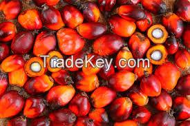 Palm Nuts, Palm Fruit
