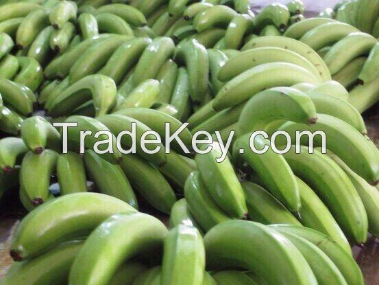 Vietnam Cavendish banana