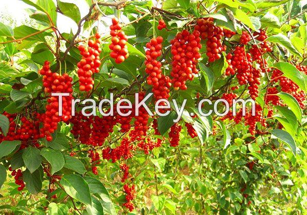 Berries Fresh Berries Fruit Fresh strawberry