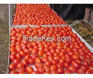 Tomato seeds  Tomato paste  Tomato paste 2200g Tin tomatoes 200g