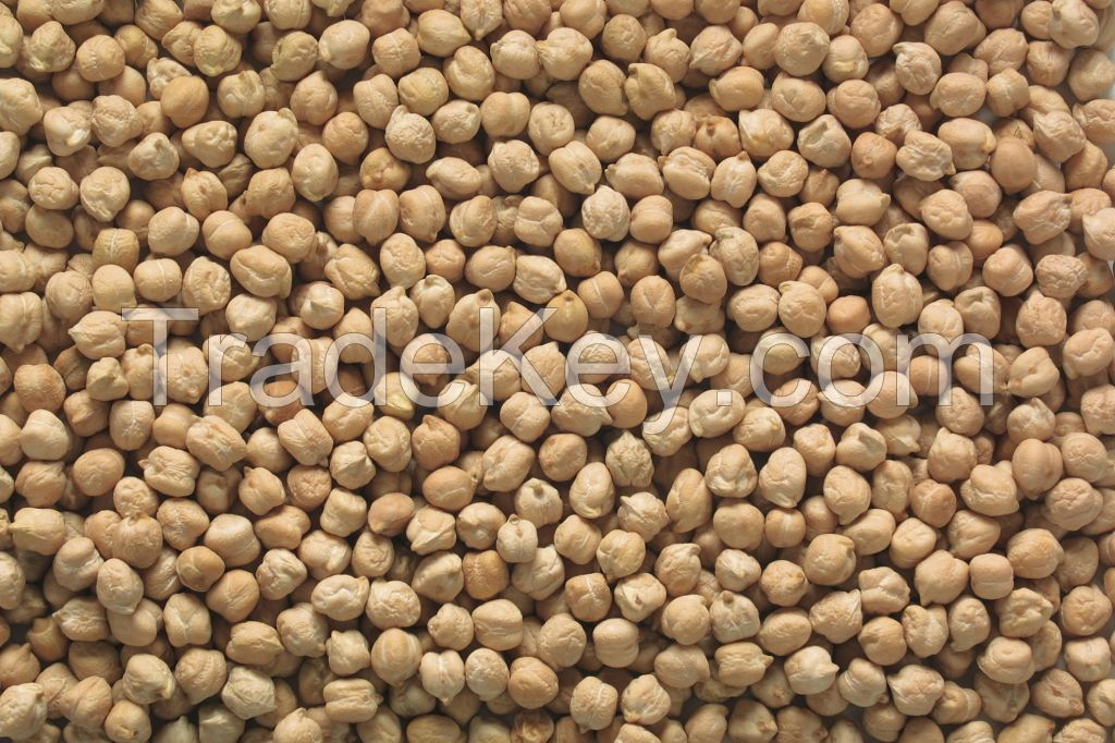 High-Nutrition Chickpea