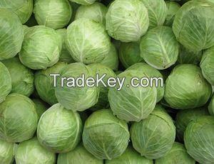 Fresh cabbage supplier