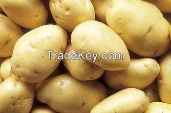 High quality Fresh potatoes supplier