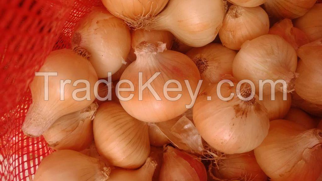 Golden onion,fresh onion,big onion