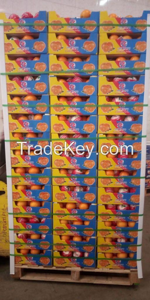 Fresh Citrus Fruits , Navel Orange, Egyptian orange, Oranges