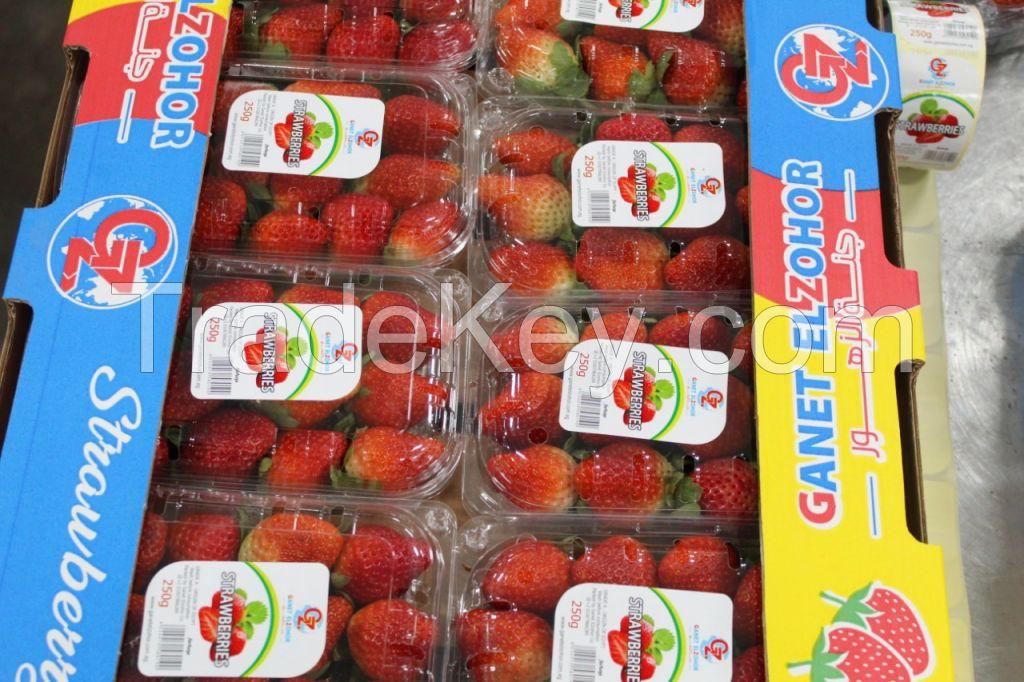Egyptian fresh strawberry