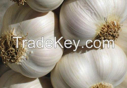 Wholesale Fresh White Garlic