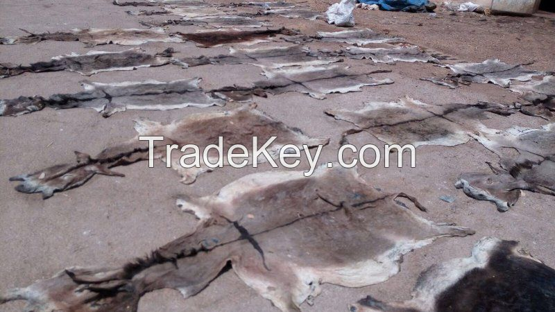 High Quality Dry And Wet Salted Donkey/Wet Salted Cow Hides /Cow Head Skin