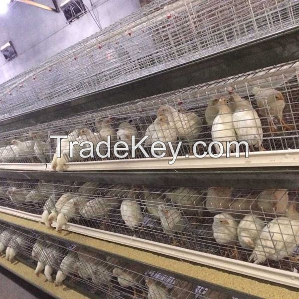 poultry layer farming equipment layer chicken battery cages for zimbabwe poultry farms