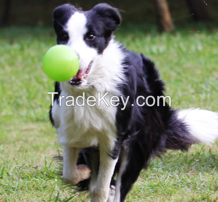 FDA harmless Bone shape dog toy durable chews