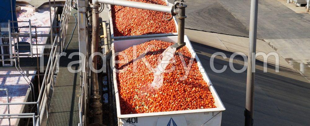 Tomato Paste 36 - 38