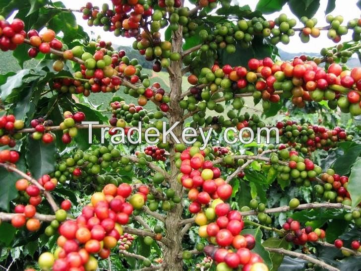 Caferros Premuim Colombian Coffee