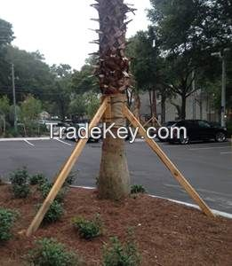 PALM TREE CROP(+84987635199)