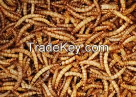 Dried worms