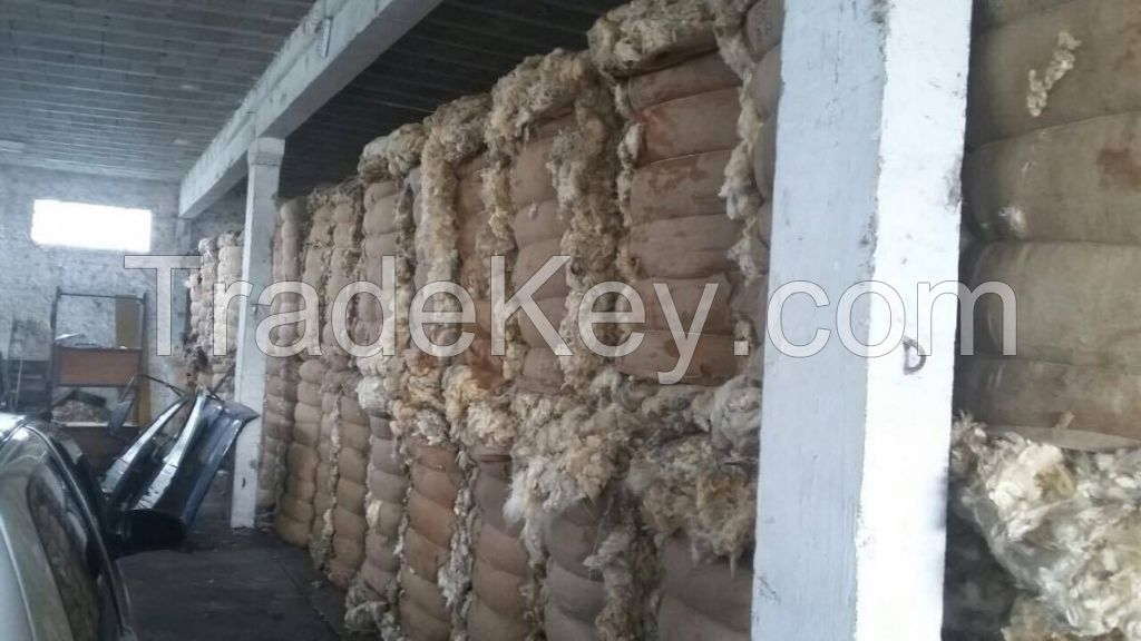 Sheep wool in nature