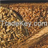 Milling Wheat 3, 4 and 5 grade