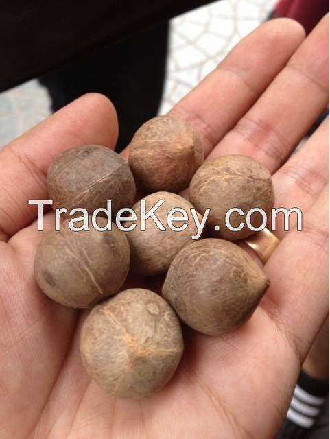 Almond nut, cashew nuts, Blanched peanut, brazil nut, Pistacious nut, macadamia