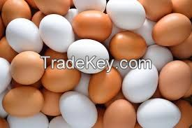 Fertile Hatching Chicken Egg/Fresh Chicken Table Eggs/Quail Eggs, ostritch eggs