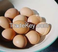 Fresh Chicken Egg