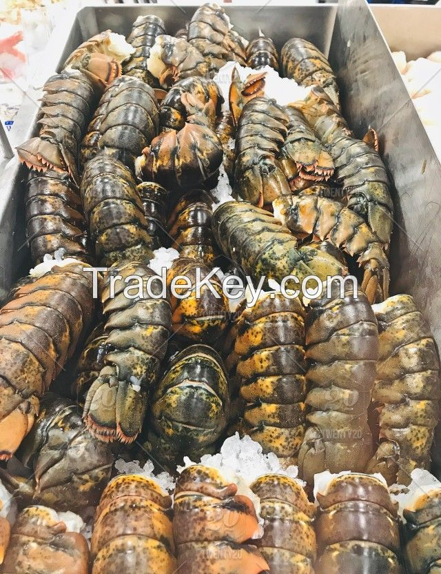High Quality Russian Frozen King Crabs