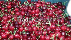 Short stem Turkish cherries