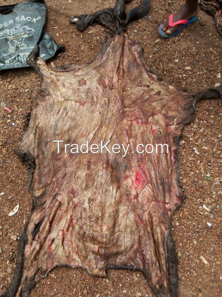 Dry And Wet Salted Donkey/Horse Hides/Wet Cow Hides