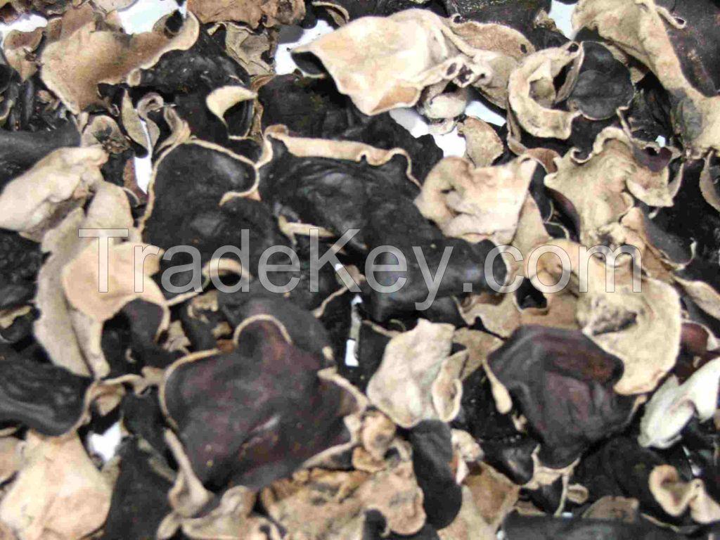 Black Fungus (Wood-ear Mushroom)