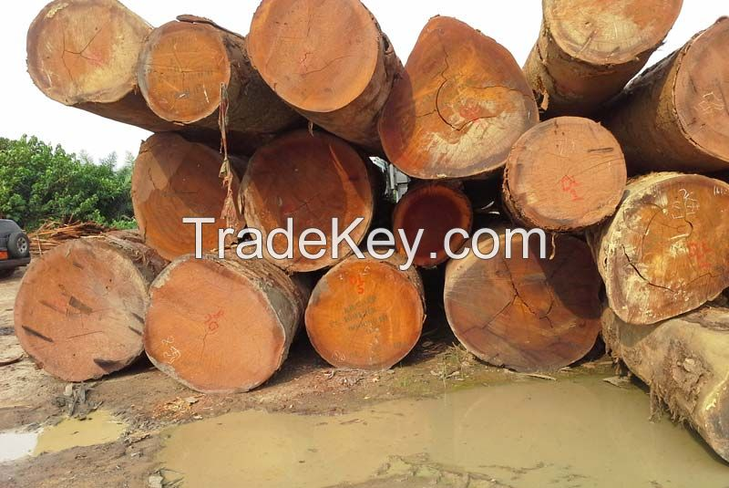 Teak timber logs available