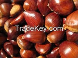GOOD QUALITY CHEST NUTS