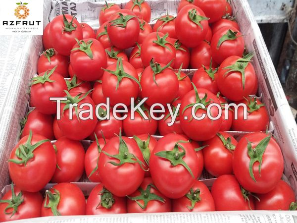 High Quality Tomatoes