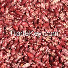 Light Red Speckled Kidney Beans