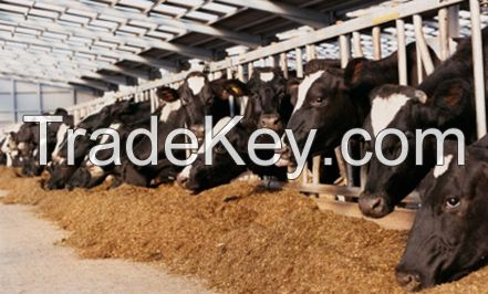 Soybean Meal Use forl Feed