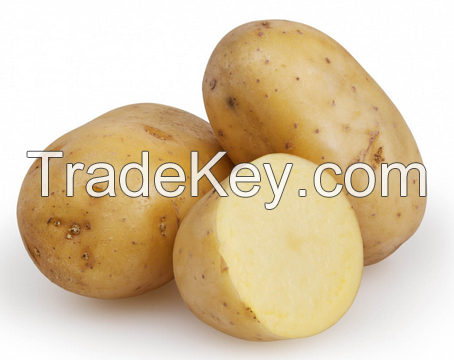 Fresh Vegetables such as : Garlic, Ginger, Okra, Chilli, Potatoes capsicum and more...