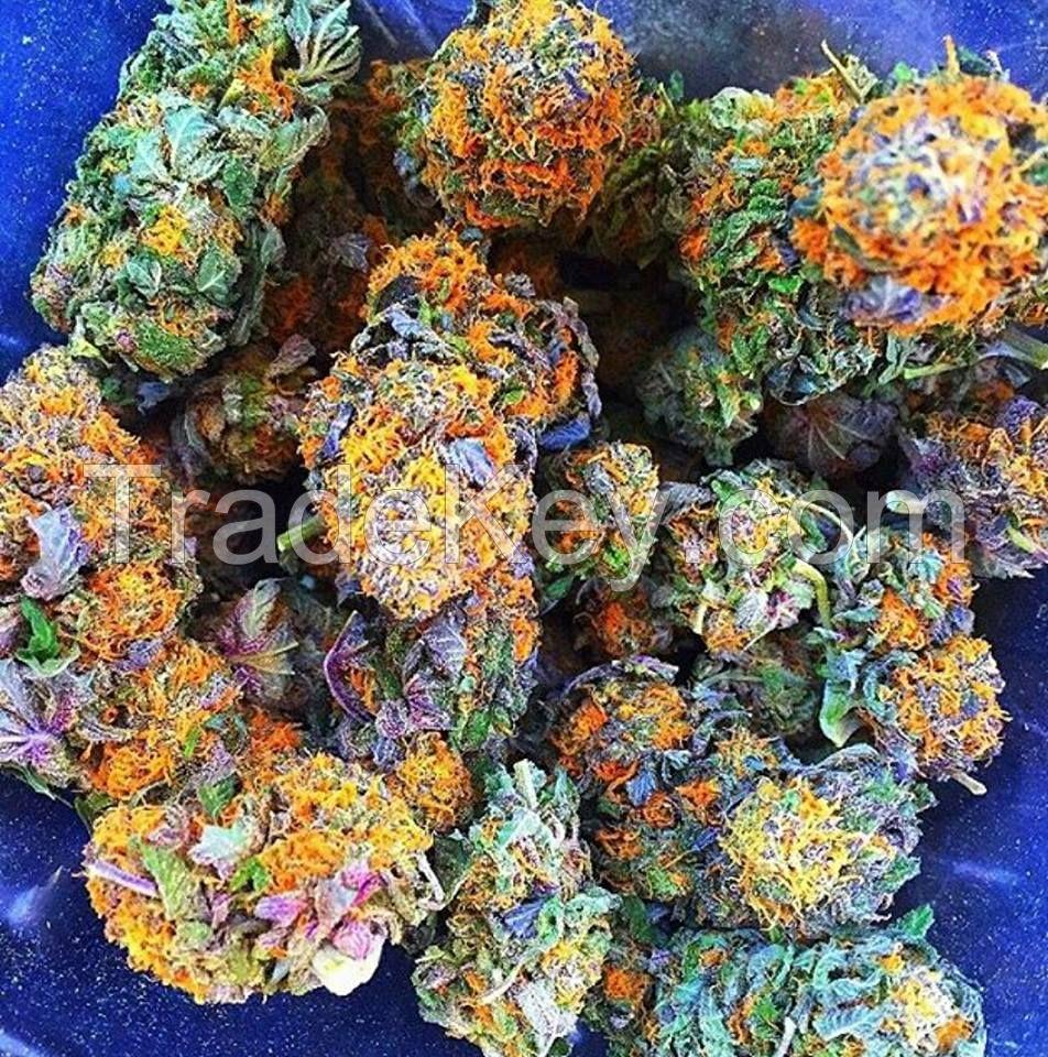 Medical cannabis weed