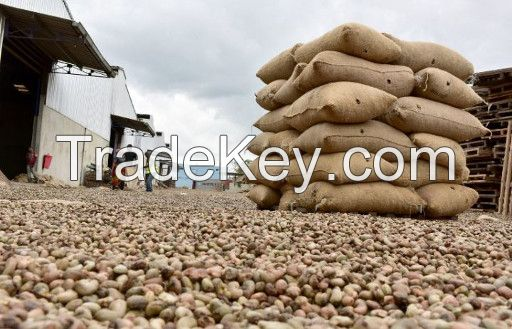 Raw cashew nuts and coffee beans