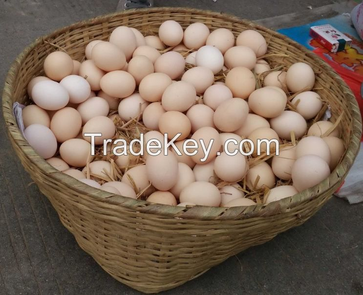Fresh Table White And Brown Chicken Eggs
